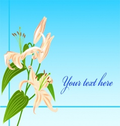 lily flower greatings card vector image