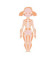 Anatomy chart of human skeleton female body vector