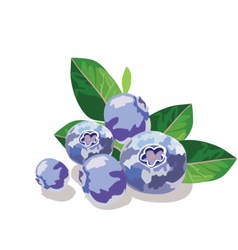 Blueberry or bilberry fruits isolated vector