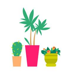 three cute plants color banner vector image