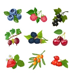 Berries of trees and shrubs set vector