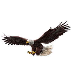 Bald eagle flying draw and paint on white vector
