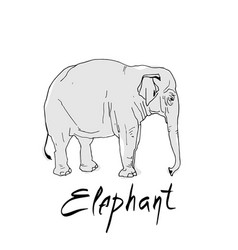 cute elephant cartoon of vector image