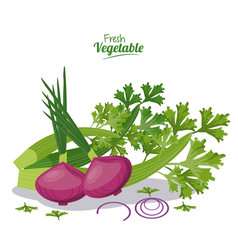 Fresh vegetables onion celery nutrition diet vector