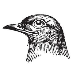 Head of cuckoo vintage vector