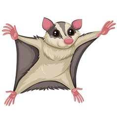 Flying squirrel with happy face vector image