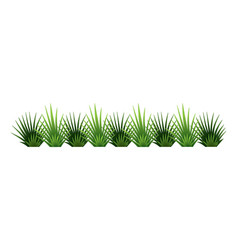 Green grass border fresh green brush grass vector