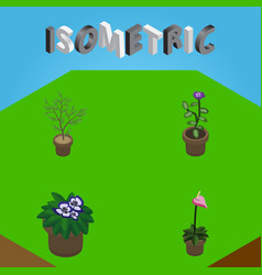 Isometric flower set of grower flowerpot fern vector