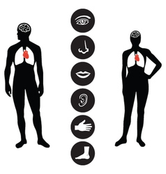 Medical human body part icon vector