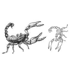 Scorpio sketch drawn black-and-white image vector