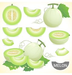 Set of cantaloupe honeydew honeymelon fruit vector