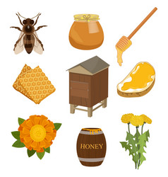 set of items necessary for collecting honey and vector image