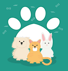 group of cute pets characters vector image
