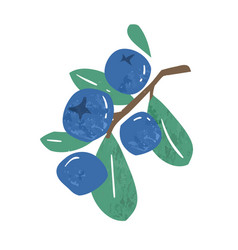 hand drawn branch ripe blueberries or vector image