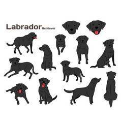 Labrador in action vector