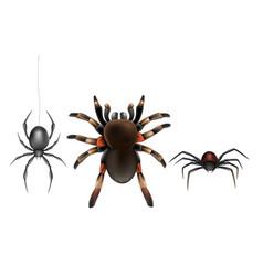 Poisonous spiders species cartoon set vector