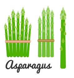 Set of vegetable asparagus icon set vector