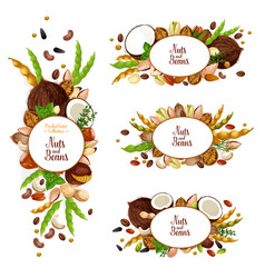 nuts and beans icons with vegetarian food harvest vector image
