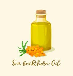 sea buckthorn oil in glassware bottle near berries vector image