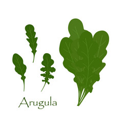 set with arugula vector image