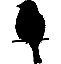 Sparrow on a wire vector