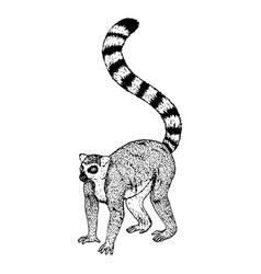 hand drawn lemur sketch vector image vector image