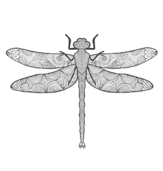 Dragonfly Animals Hand drawn doodle insect vector image