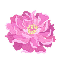 Blooming pink peony flower on vector