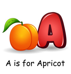 Fruits alphabet a is for apricot vector
