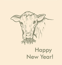 Greeting card of bull simple text vector
