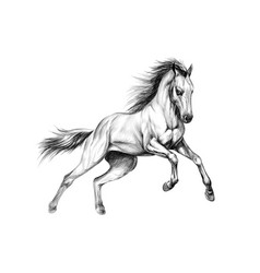 Horse run gallop on a white background hand drawn vector