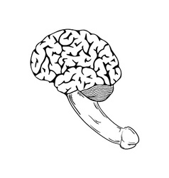 human brain with penis vector image