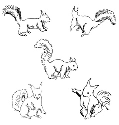 Squirrels in different positions Pencil sketch by vector image