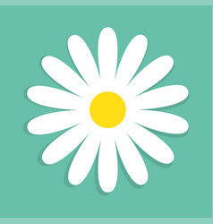 cute chamomile flower isolated on blue background vector image