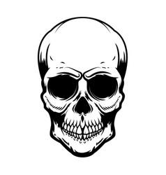 human skull isolated on white background design vector image