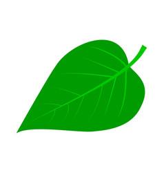 lilac leaf vector image