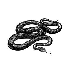 Python in vintage style serpent or poisonous vector