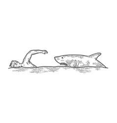 Shark chasing swimmer sketch vector