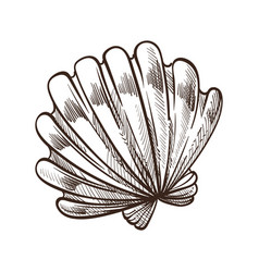 shell or seashell conch or mollusk isolated vector image