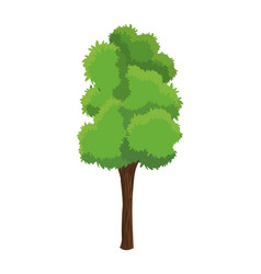 tree plant natural ecology growth vector image