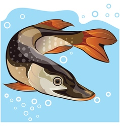 Fish big pike vector image