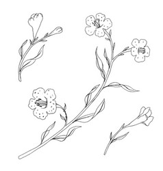Branch with leaves and flowers vector