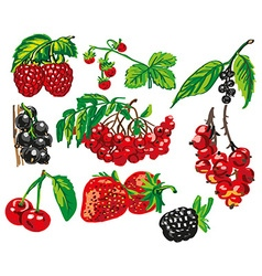 colored berries on white background vector image