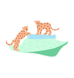 Two cute leopards vector