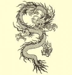 dragon vector vector image