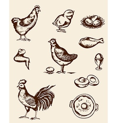 vintage hand drawn chickens and eggs vector image vector image