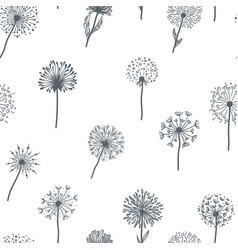 Dandelion old plant with seeds sketches outline vector