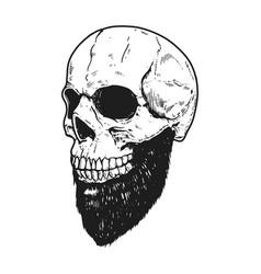 Hand drawn human skull with beard on light vector