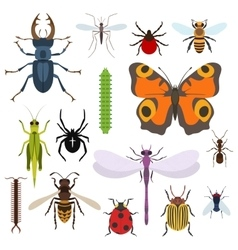 Insects set of icons from top view vector