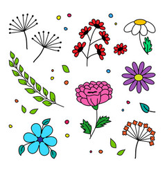 Set different flowers and plant hand drawn vector